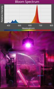 BLOOM Spektrum