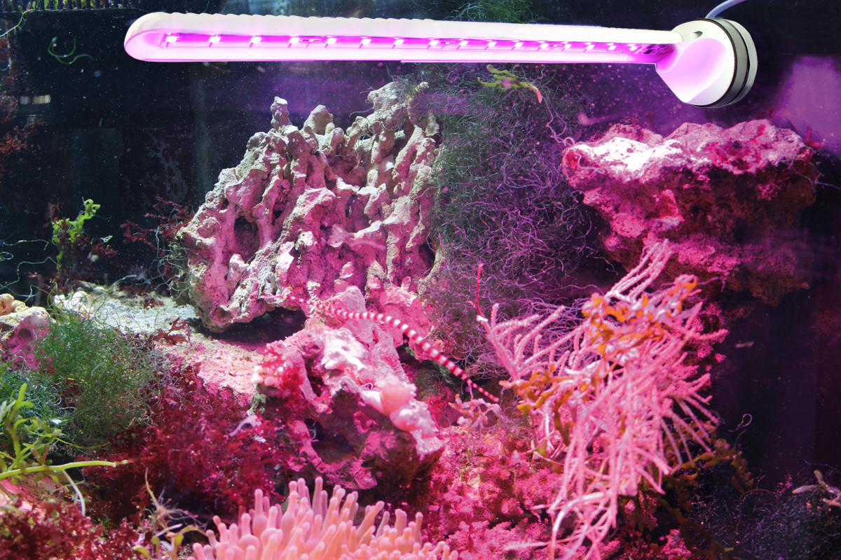 LED eco chic refugium